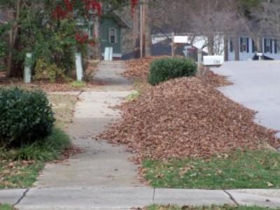 Raleigh Seasonal Loose Leaf Collection